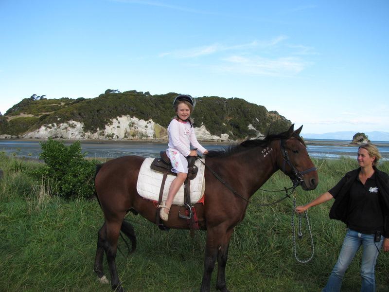 Golden Bay Horse in Puponga  Golden Bay
